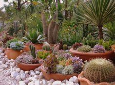 Part of Josi Cardoso's succulent garden in Santa Catarina, Brazil.