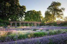 Berkshire — Dan Pearson Studio Folly Farm, Colors Drama, Dan Pearson, Realistic Games, Sense Of Place, Ornamental Grasses, Summer Garden, Hedges, Garden Landscaping