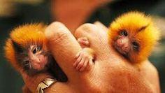 Its a so so so cute! <3
