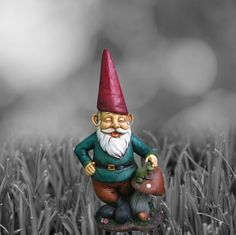 Someone's in a good mood... buy him and other gnomes for sale through welovegnomes.com