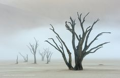 "Dead camelthorn trees in Deadvlei, Namibia ...  ""The Veil"" by Marsel van Oosten"