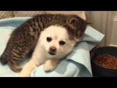 Please save cats, dogs and all animals you can help.  You'll be sharing love and cuddles! Rescued Kitten is Madly in Love With His New Family's Dog. The Dog Doesn't Seem to Mind At All! (VIDEO) | One Green Planet
