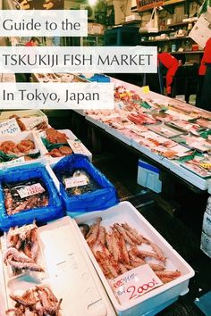 Navigate the Tskukiji Fish Market in Japan like a pro