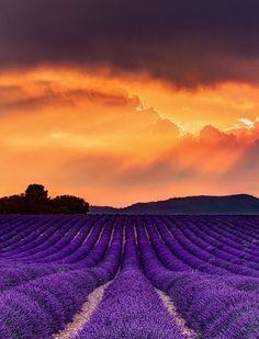 Lavender Sunset, France