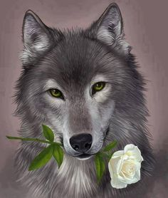 wolf with white rose Anime Wolf, Beautiful Wolves, Animals Beautiful, Cute Animals, Wolf Photos, Wolf Pictures, Tier Wolf, Wolf Artwork, Wolf Painting