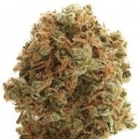 7 Best Sativa Hybrids images in 2014 | Cannabis, Medical