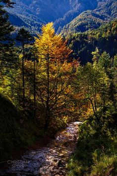 Weissenbachtal Salzkammergut Landscapes, Country Roads, Mountains, Nature, Travel, Paisajes, Scenery, Naturaleza, Viajes