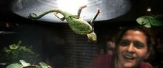 Repticon Baltimore Reptile and Exotic Animal Show Lutherville-Timonium, MD #Kids #Events