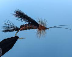 Salmonfly #6