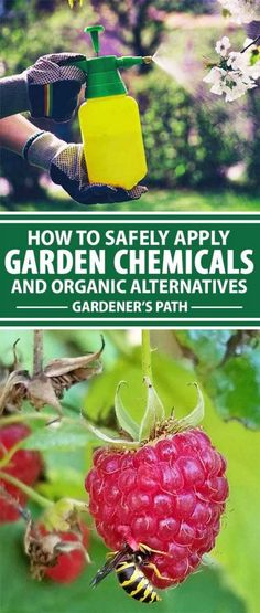 Cut out the guesswork and do things the right way when it comes to garden pests! Prepare yourself for a primer on all things pesticide, and read about why applying chemicals is always the last-ditch solution. Read more now on Gardener's Path!