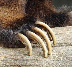Bear Claws, Mountain Man, Teeth, Bones, Indian, Dance, Animales, Dancing, Tooth