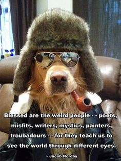 lol I want a golden retriever Funny Dogs, Cute Dogs, Funny Animals, Cute Animals, Animal Memes, Animal Fun, Animal Humor, Baby Animals, Tierischer Humor