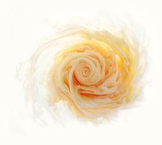 """""""Aqueous Roses"""" by Mark Mawson."""