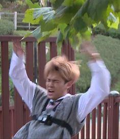 Woozi, Wonwoo, Seungkwan, Jeonghan, Diecisiete Memes, Funny Kpop Memes, Seventeen Memes, Mingyu Seventeen, Carat Seventeen