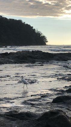Fauna, My Dream Home, Costa Rica, Beach House, Animals, Beach Homes, Animaux, My Dream House, Animal