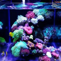 Saltwater Aquarium - Find incredible deals on Saltwater Aquarium and Saltwater Aquarium accessories. Let us show you how to save money on Saltwater Aquarium NOW! Saltwater Aquarium Beginner, Saltwater Aquarium Setup, Aquarium Sump, Coral Reef Aquarium, Saltwater Fish Tanks, Marine Aquarium, Aquarium Fish Tank, Fish Aquariums, Aquarium Design