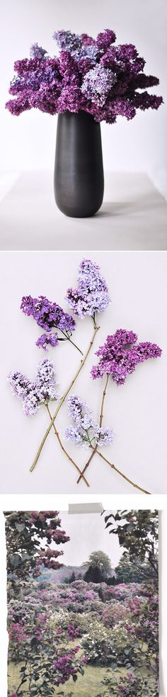 if I ever get married I want it to be outside with lilacs growing everywhere!