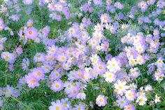 Imagem de flowers, nature, and purple