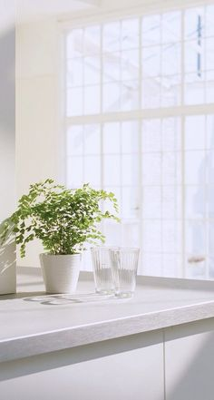 Behind the windows Pastel Wallpaper, Tumblr Wallpaper, Screen Wallpaper, Wallpaper Backgrounds, Iphone Wallpaper, Cool Wallpapers For Your Phone, Cute Wallpapers, Plant Aesthetic, White Aesthetic