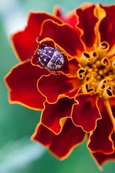 Bug on a flower by Alexander Kraft