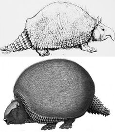 extra armor gave glyptodon an edge