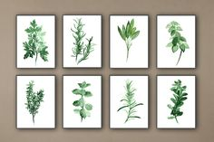 Kitchen Herbs Art Prints Set of 8 Green Botanical Herbalist Kitchen Decor Wall Paintings by ColorWatercolor on Etsy