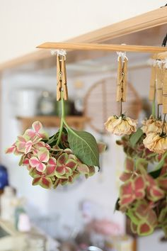 Dried flower  http://www.roomflavor.com/room.php?4702