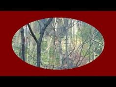deer hunting videos Scouting deer because I have a bad case of buck fever part 2 - http://best-videos.in/2012/11/10/deer-hunting-videos-scouting-deer-because-i-have-a-bad-case-of-buck-fever-part-2/