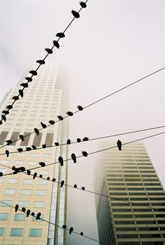 City birds (©Matthias Luetolf, National Geographic Photo Contest)