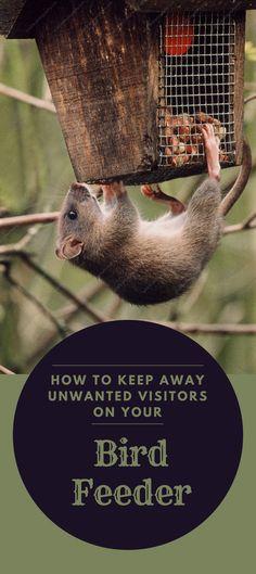 16 Best Keep Birds Away Images Keep Birds Away Potager