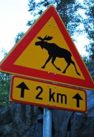 When you see this warning sign, slow down. Be happy if you don't run into an elk.