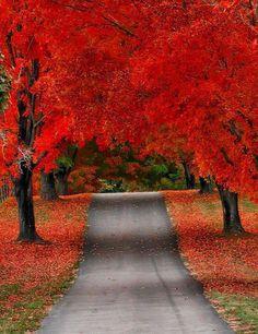 Crimson Autumn, Door County Wisconsin