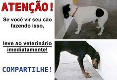 Descubra o que significa isso: http://tudosobrecachorros.com.br/2015/02/cachorro-pressionando-cabeca-na-parede.html
