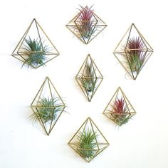 Himmeli Wall Sconce Air Plant Hanger.  Wall mounted himmeli geometric diamond air plant holder.  Air