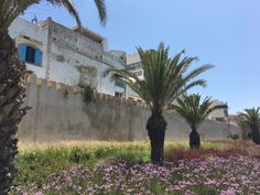Marrakech, Strand, Abs, Morocco, Road Trip Destinations, Summer Recipes, Nature, Abdominal Muscles, Killer Abs