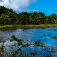 #chile #chiloe #nature #natureloversgallery #naturephotography #landscapes #landscapelover #landscaper #photographyislifeee #photographystyle #photographysoulss #photographylovers #nikon #nikontop #nikonartists #nikonphotography_ #nikondslr #nikonowners #nikond3300 #nikond3300dslr #nikond3300photos #nikond3300photography