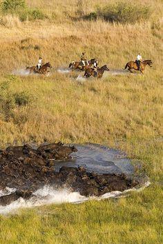 Galop avec les buffles dans le delta de l'Okavango au Botswana avec Cheval d'Aventure #afrique #voyage
