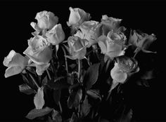 dead black roses | death cold Black and White sad pain flowers dead rose roses