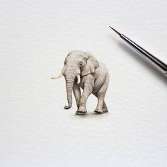I Started Drawing Miniature Paintings Because I Did Not Have Time For Bigger Drawings And Now It's My Passion Detailed Paintings, Mini Paintings, Animal Paintings, Miniature Paintings, Elephant Sketch, Illusion Drawings, Watercolor Animals, Elephant Watercolor, Mini Canvas Art