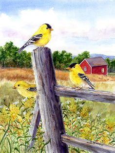 Goldfinches by Maureen McCarthy ~ birds
