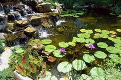 It is a common myth that you can't leave your pond fish outside once the cold sets in. Actually, fish do just fine during winter. That said, Deck and Patio's Ou… Small Water Gardens, Garden Water, Pond Habitat, Pond Maintenance, Goldfish Pond, Pond Design, Water Features In The Garden, Fish Ponds, Ponds Backyard