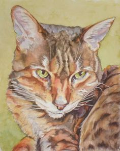 'Nala' by Anita Davies © All rights reserved This is the pet portrait I was working on last week, now safely with the client and gifted to h. Baby Kittens, Watercolor And Ink, Cat Art, Pet Portraits, Dog Cat, Kitty, Fine Art, Pictures, Animals