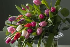 La tulipanene strekke seg mot lyset, da får de en herlig form. Flowers, Plants, Plant, Royal Icing Flowers, Flower, Florals, Floral, Planets, Blossoms