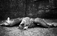 http://www.vice.com/de/read/fotos-dead-traffic-geschunde-gesichter-aus-sierra-leone/41130