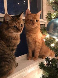 A internet não está sabendo lidar com estes dois gatinhos apaixonados - Mega Curioso