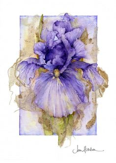 Botanical Illustration by Jan Harbon. I like the bold center, less focussed outer edges and that the iris bursts out of the rectangle boundary. Art And Illustration, Illustrations, Arte Floral, Watercolor Flowers, Watercolor Paintings, Watercolors, Art Aquarelle, Purple Iris, Botanical Art