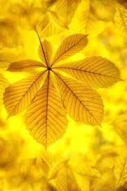 Resultado de imagem para cor amarelo dourado