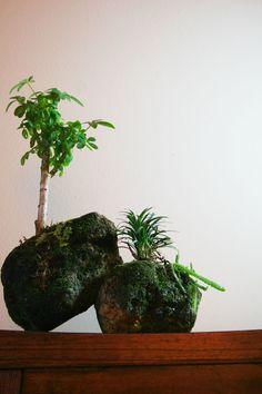 The Rainforest Garden: Make Your Own Miniature Mountaintop