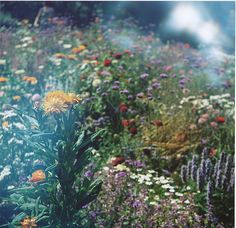 Misty Wild Flowers