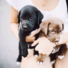 Happiness is an armful of puppies...
